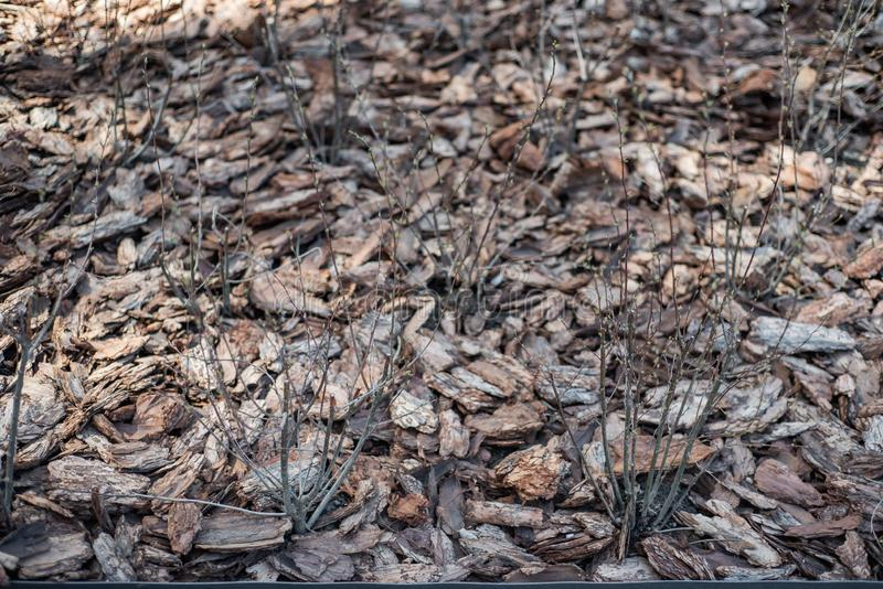 Pine Bark Mulch Stock Images - Download 616 Royalty Free Photos