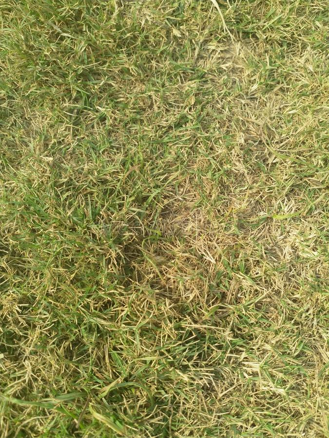 Download Clean Green Grass In High Resolution Stock Image - Image of resolution, high: 105823339
