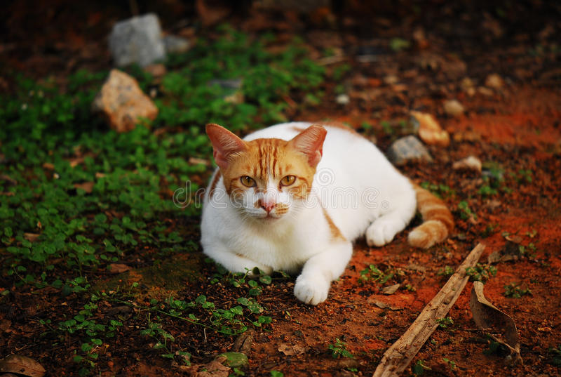 clean katt royaltyfri foto