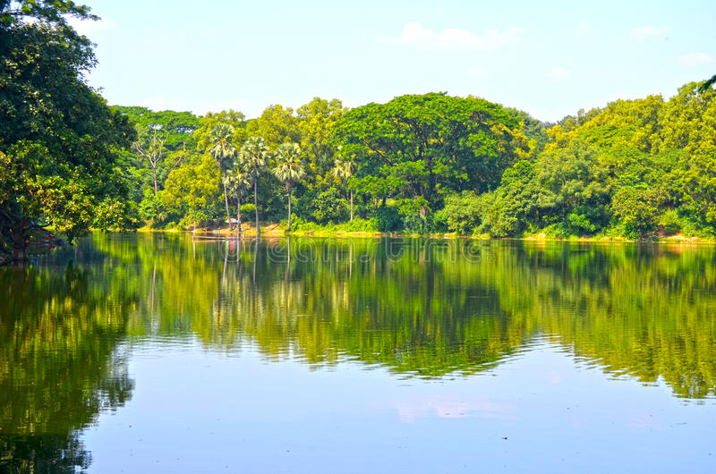 Clean lake in green spring summer forest. Blue sunny sky royalty free stock photos