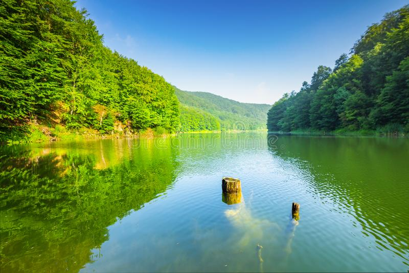 Clean lake in green spring summer forest. Clean tranquil lake in green spring summer forest with blue sunny sky stock photography