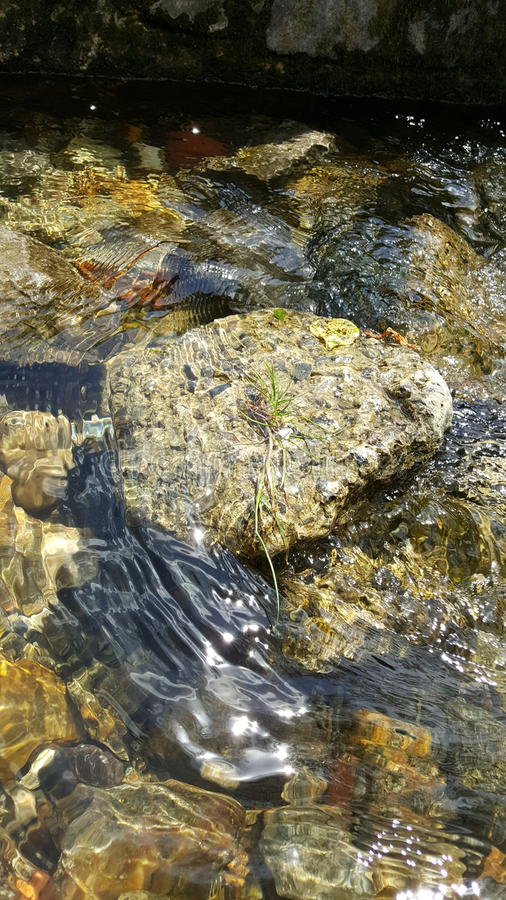 Clean rivers Salisbury. Stones beneath the water royalty free stock image