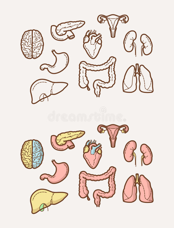 Clean and sharp outline icons about Human Anatomy stock illustration