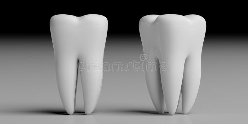 Clean shiny teeth isolated on grey black background. 3d illustration. Teeth health, dentristy concept. Clean shiny tooth models isolated on grey black background stock illustration