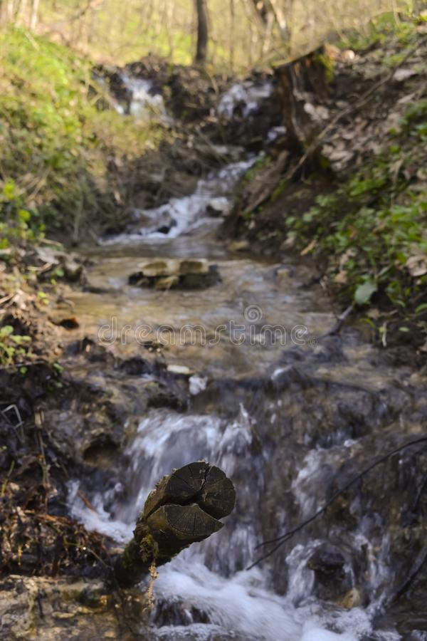 Stream in the forest royalty free stock image