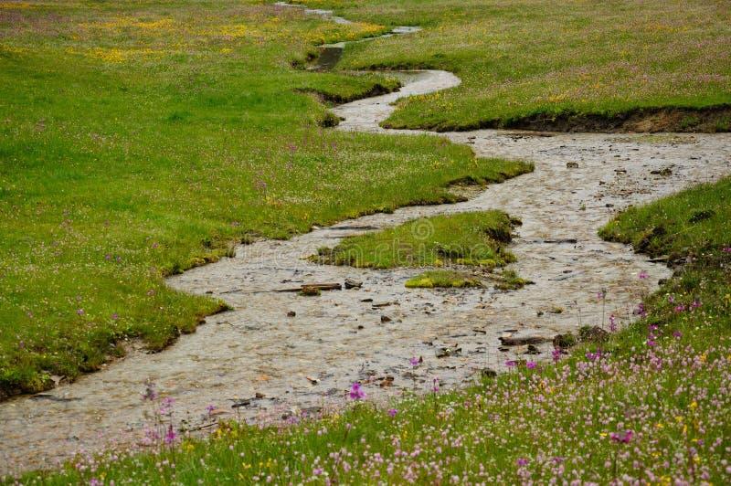 Clean stream in the grass farm in SHANGRI-LA stock image