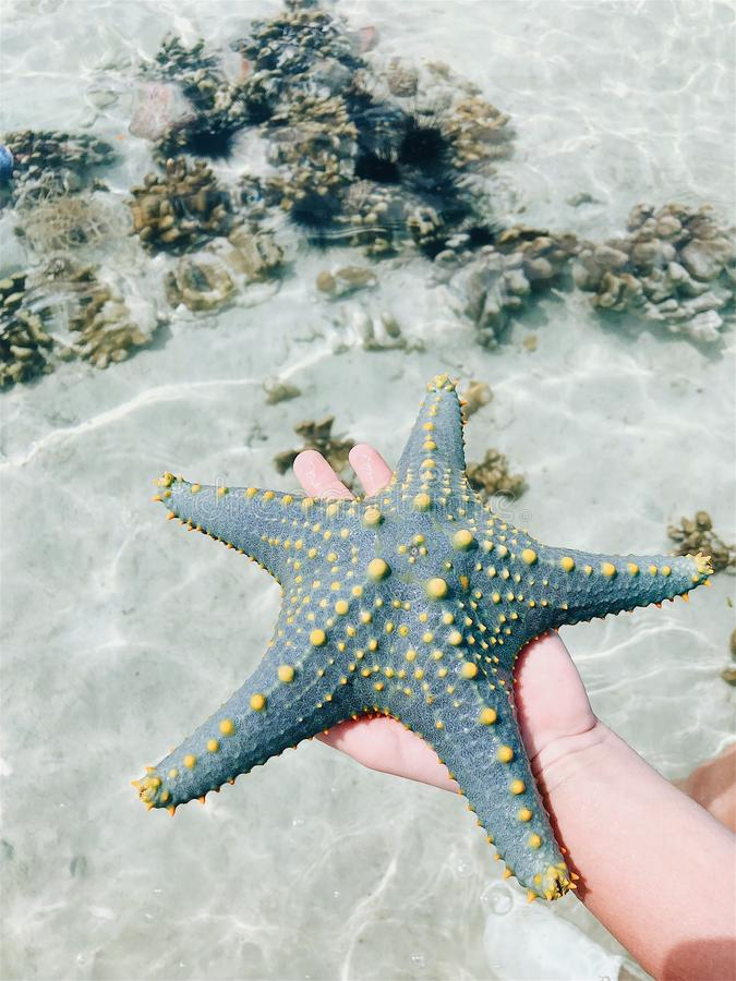 Starfish in the hands under the rays of the sun royalty free stock image