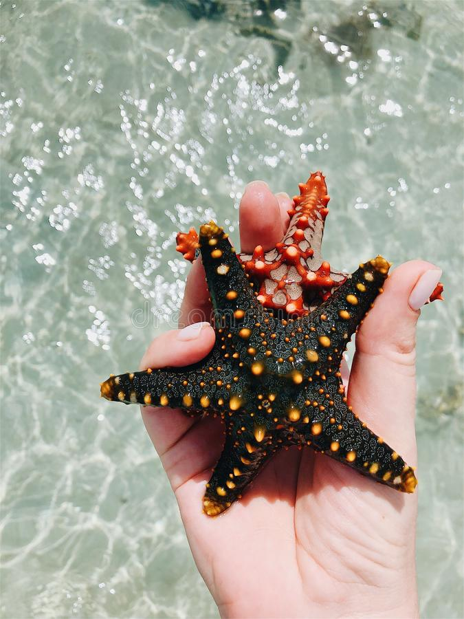 Starfish in the hands under the rays of the sun royalty free stock photography