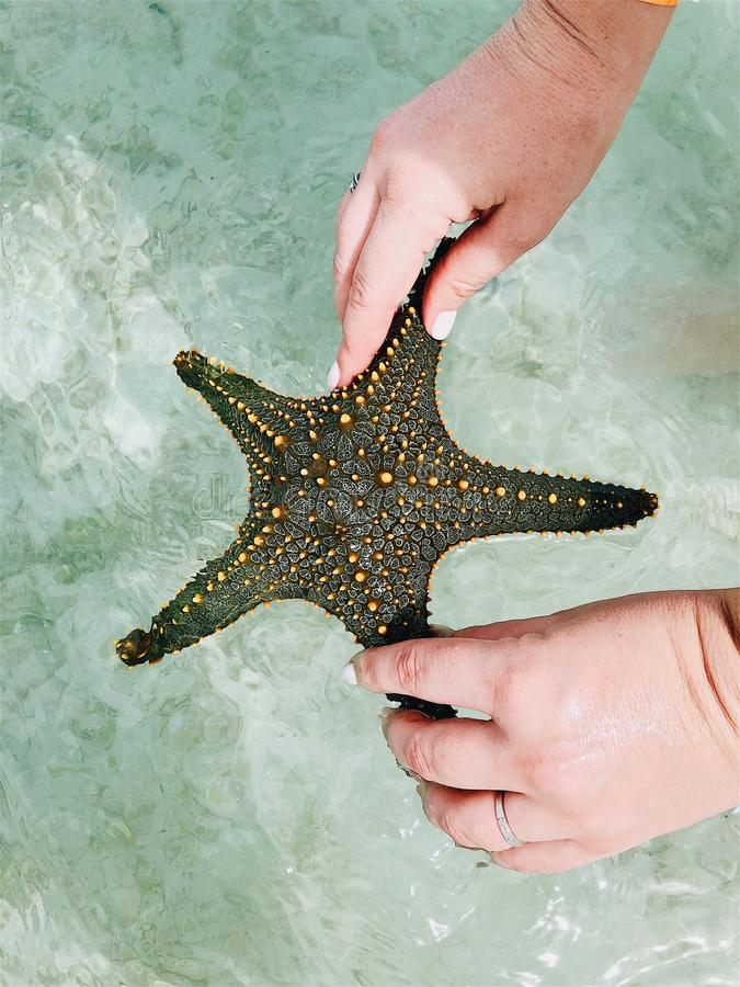 Starfish in the hands under the rays of the sun stock photos
