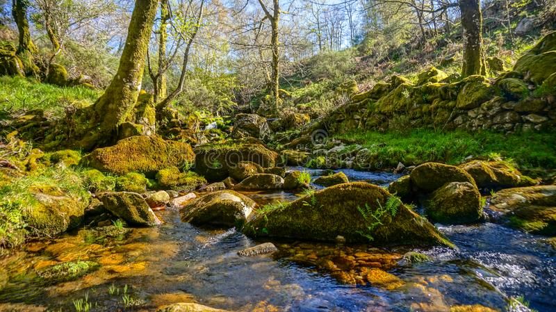 Clean water stream in nature composition at Alvão, Portugal. Clear water stream in the middle of forest at Alvão, Portugal royalty free stock image
