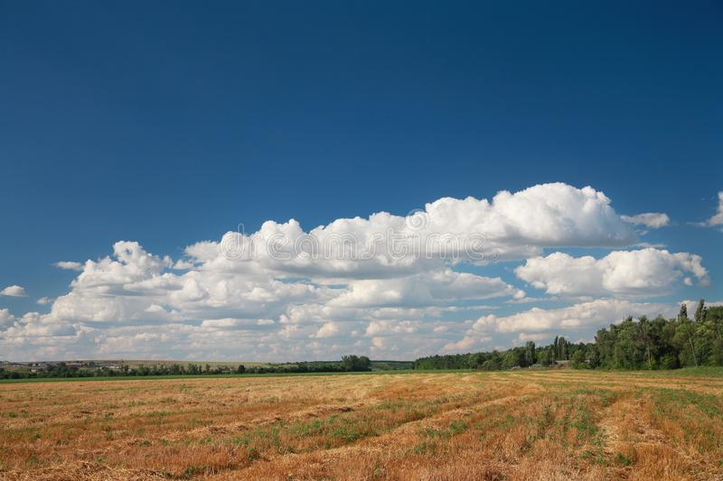 Cleaned field, rural landscape. Rural landscape, cleaned field against the blue sky, in summer stock photo