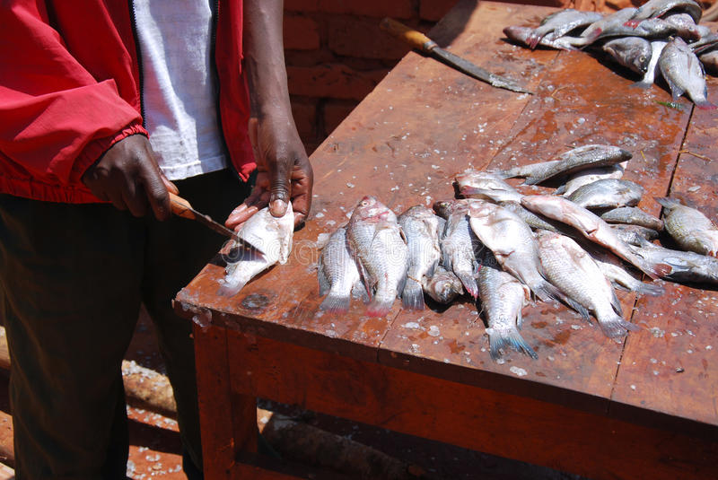Cleaner of fish at the market of Pomerini in Tanzania, Africa 72 stock photos