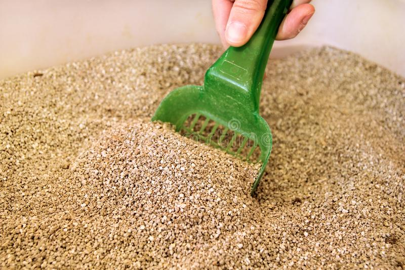 Cleaning cat litter box stock photo