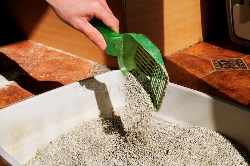 Cleaning cat litter box royalty free stock photos