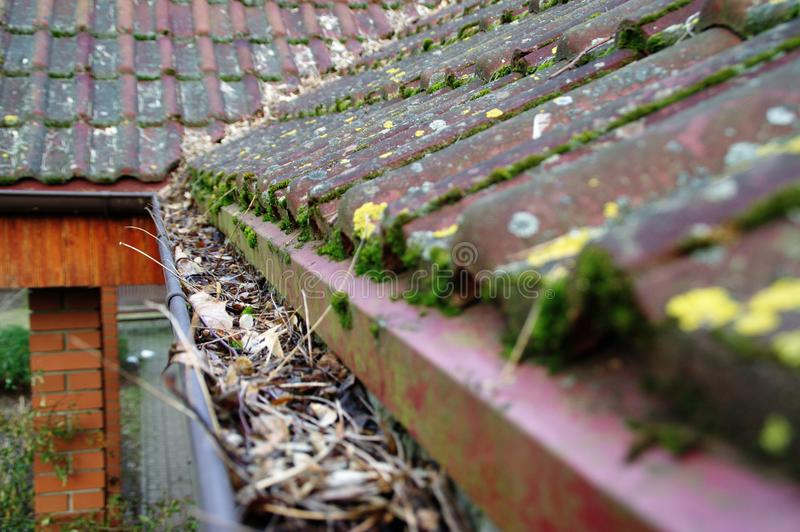 Cleaning gutter from moss and leaves. Cleaning dirty gutter from moss and leaves. Building with unclean tile roof after winter. Spring cleaning stock image