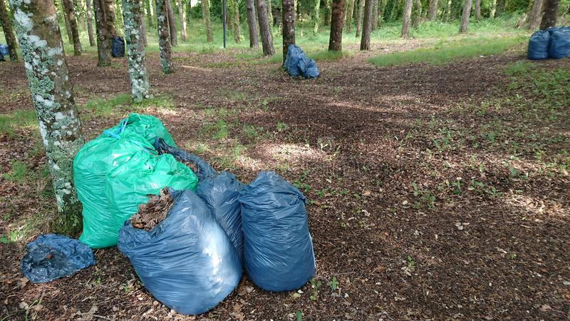 Cleaning Forest Ambient. Showing sacks of rubbish to be taken away royalty free stock photos
