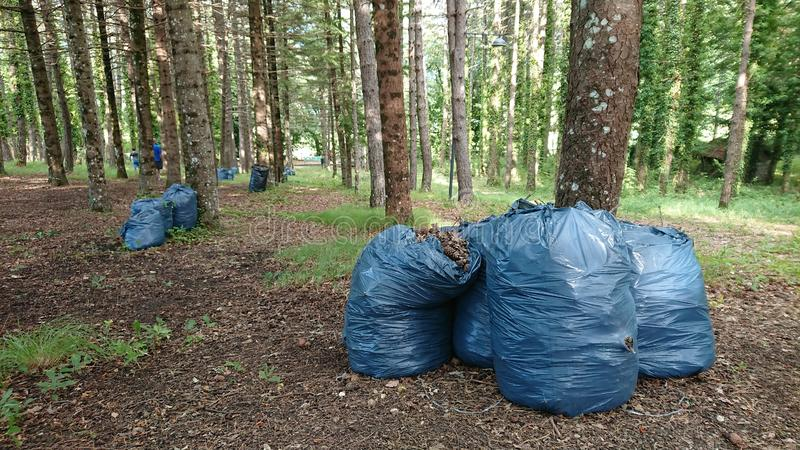 Cleaning Forest Ambient. Showing people cleaning and sacks of rubbish to be taken away royalty free stock photography