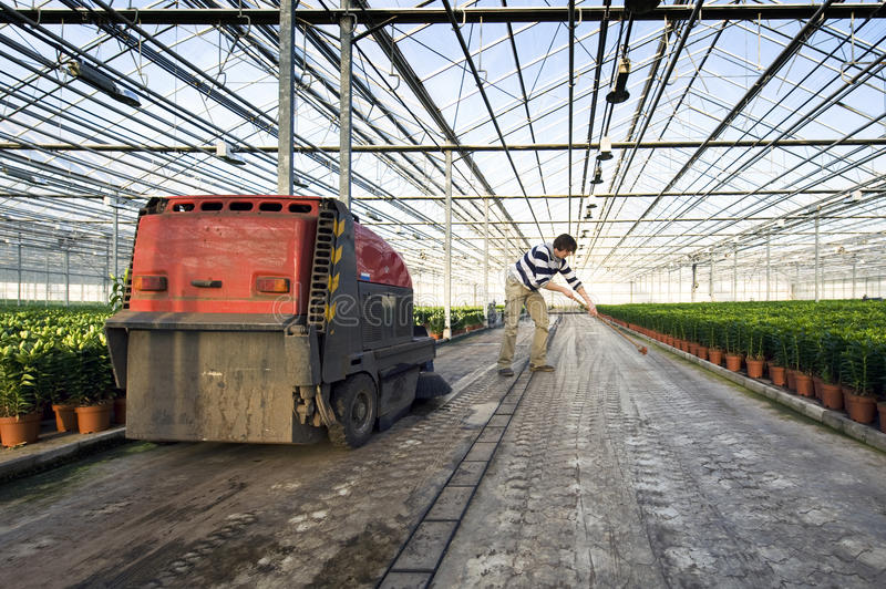 Cleaning a glasshouse. A man sweeping the concrete floor of a huge glasshouse royalty free stock photos