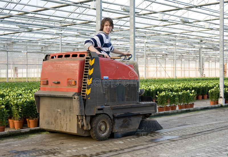 Cleaning a glasshouse. A man, driving an industrial cleaning cart, working hiw way through the concrete flooring of a huge glasshouse royalty free stock images
