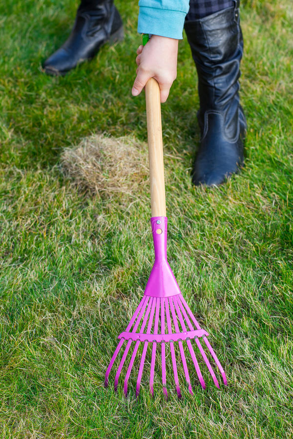 Cleaning green lawn by rake royalty free stock photo
