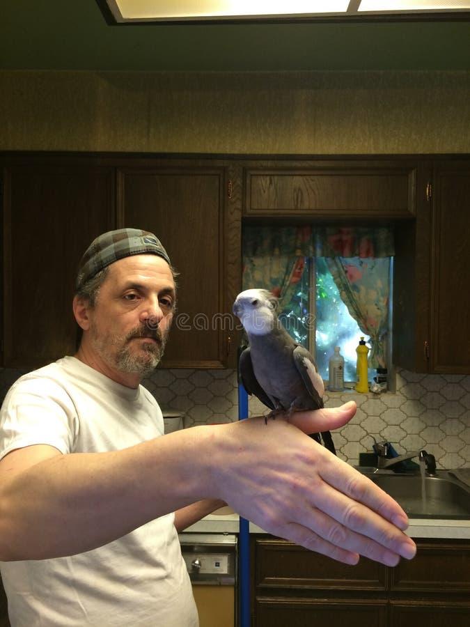 Cleaning jest dla ptaków obrazy royalty free