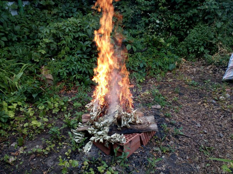 Cleaning in the old garden, burning in the fire of old dry branches in early summer. Among thickets of wild grapes royalty free stock photos