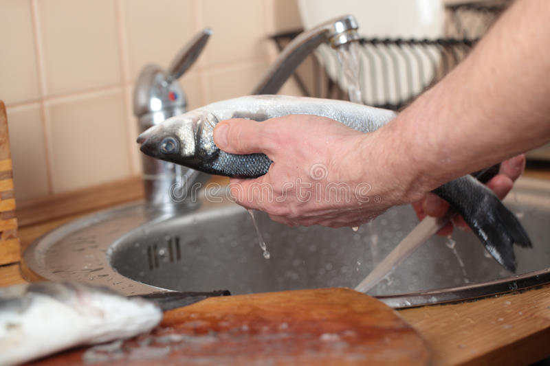 Cleaning a sea bass stock photo