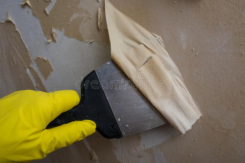 Cleaning the wall from old wallpaper. Preparing the wall for painting or sticking new wallpaper. Man in yellow gloves with a scraper in the process of removing stock photography