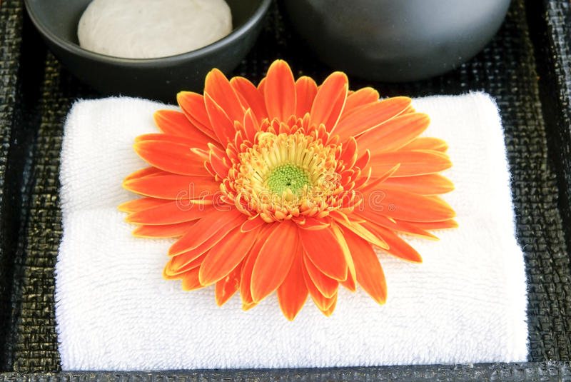 Download Cleanser And Blossom At Washbasin Stock Image - Image: 10664573
