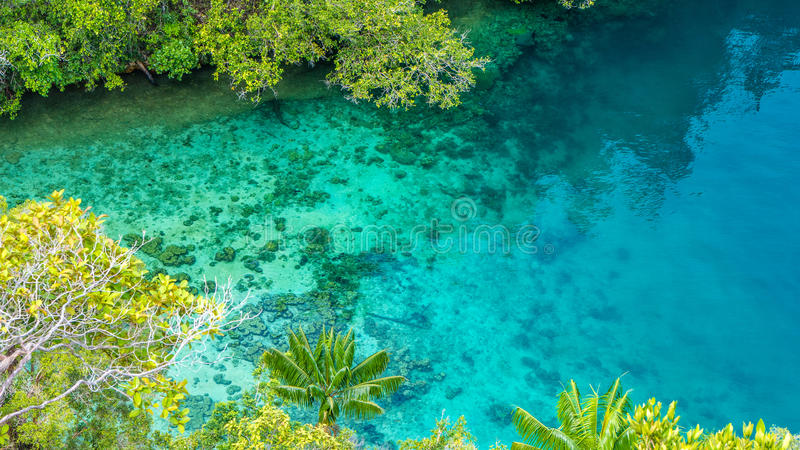 Clear Blue Water and Coral in Mangrove near Warikaf Homestay, Kabui Bay, Passage. Gam Island, West Papuan, Raja Ampat.  stock images