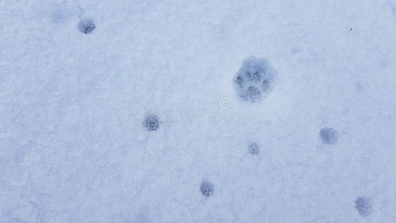 Clear cat paw footprint into clean white snow surface with deep small round spots in shape of zigzag pattern. Abstract background. Abstract winter backgrounds royalty free stock image