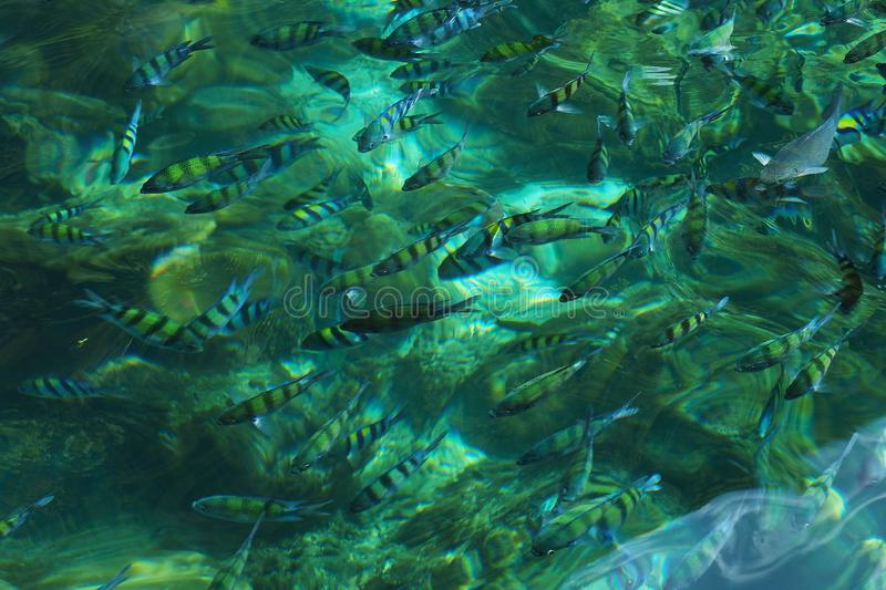 Clear crystal green sea underwater fishes coral phi phi island Thailand. Travel, fun, swim, dive, scuba, tropical, animal stock images