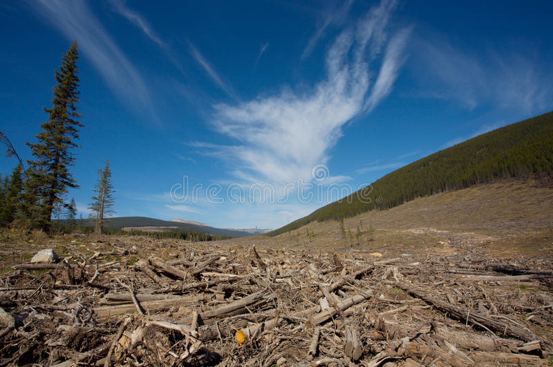 Download Clear cut forest stock image. Image of forest, clear - 15902375