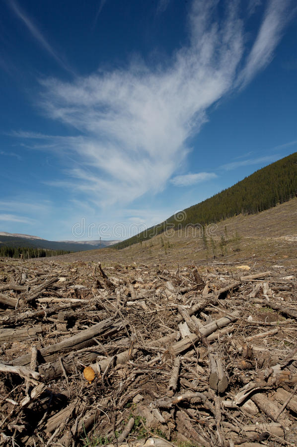Download Clear Cut Forest Stock Images - Image: 15902384