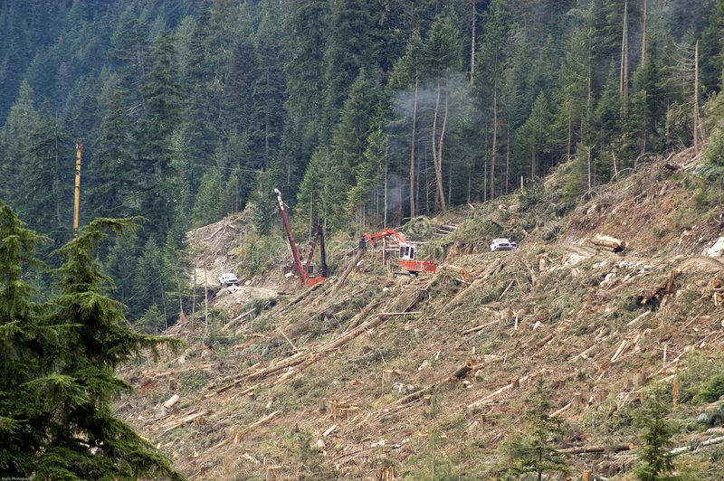 Clear-cut logging operation royalty free stock photos