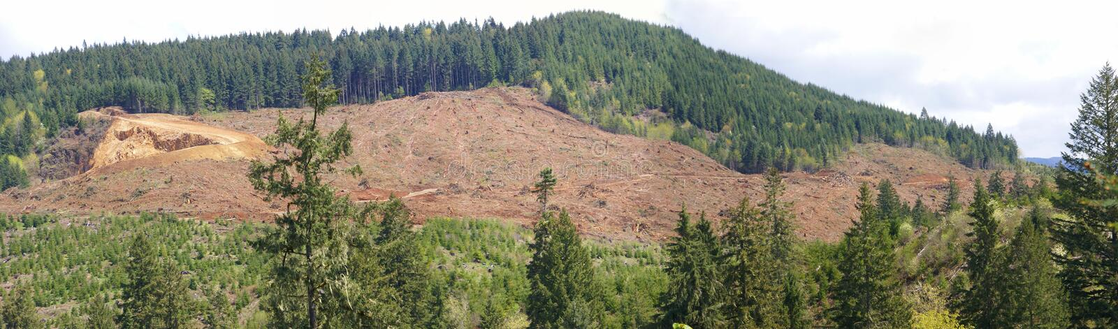 Clear cut logging slope royalty free stock photography