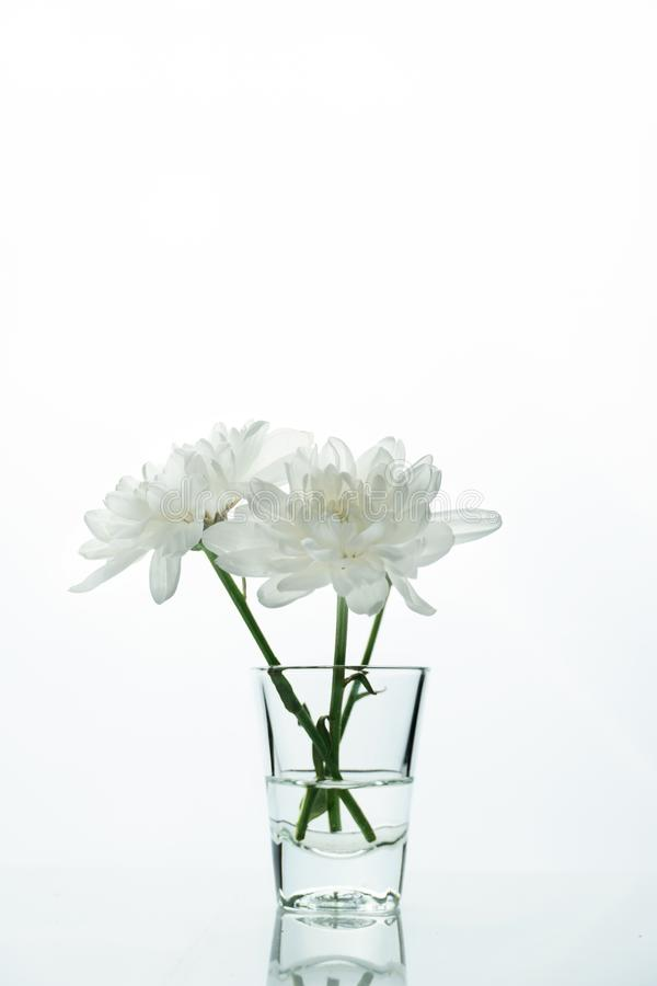 Clear glass with natural white flower minimalism background royalty free stock image