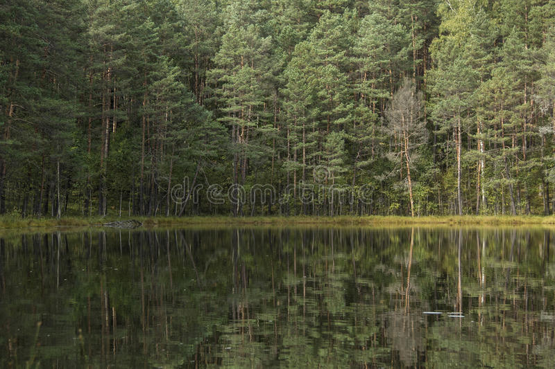 Clear lake. Forest reflects in a clear lake in Lithuania royalty free stock photography