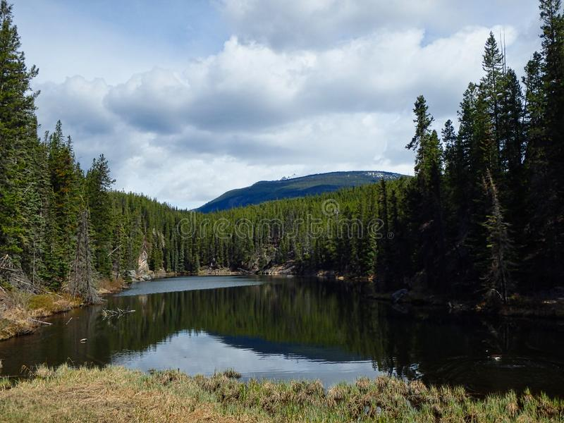 a clear lake in the woods in summer royalty free stock photo