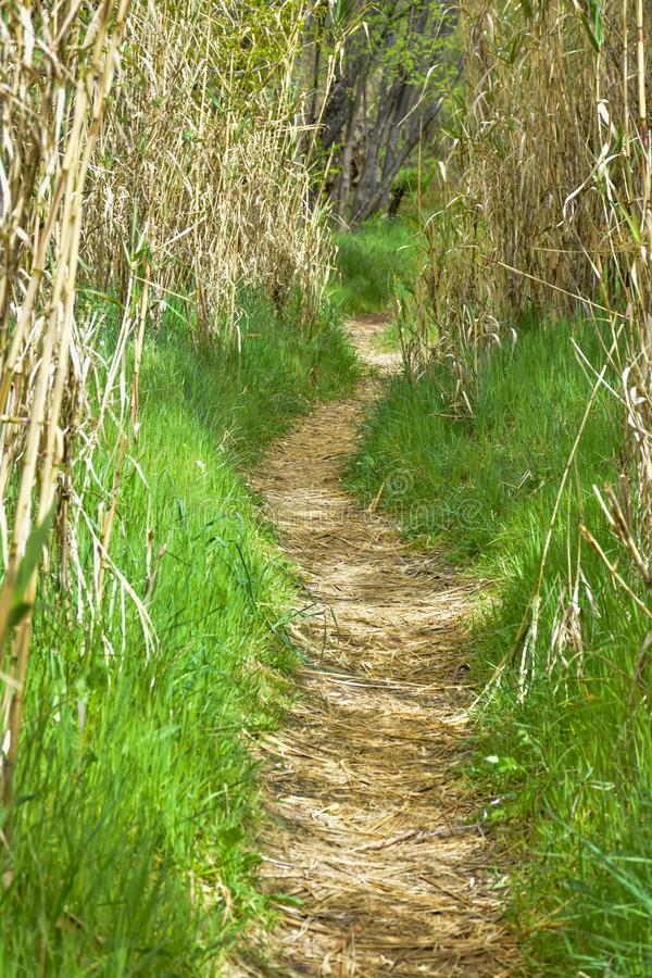 Clear path in the forest through dry hurdles. the way is covered with dry leaves and at both sides there is green grass. The sun. Rays enter through vegetation royalty free stock photos