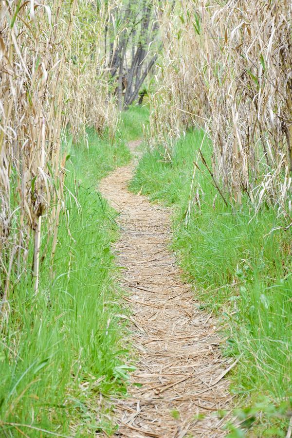 clear path in the forest through dry hurdles. the way is covered with dry leaves and at both sides there is green grass. The sun stock images