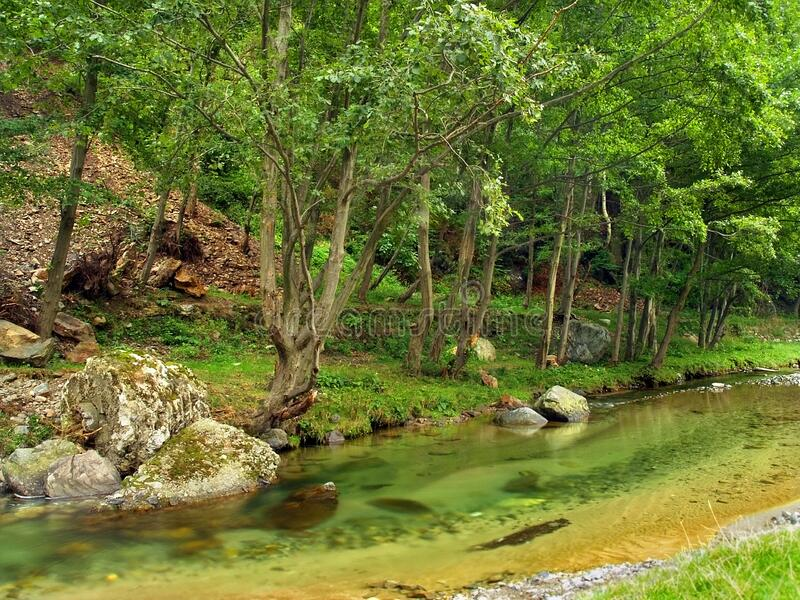 Crystal clear river flows near forest mountain landscape. Clear river flows by the colorful forest, rock in water, beautiful landscape royalty free stock image