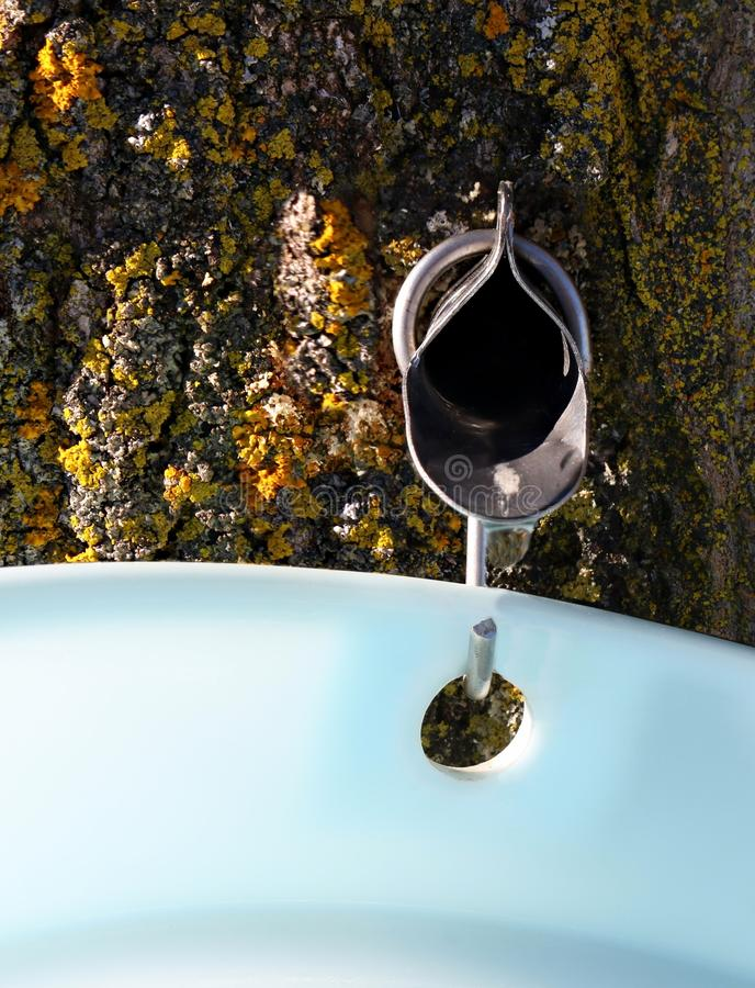 Clear sap dripping into bucket with snow in background royalty free stock images