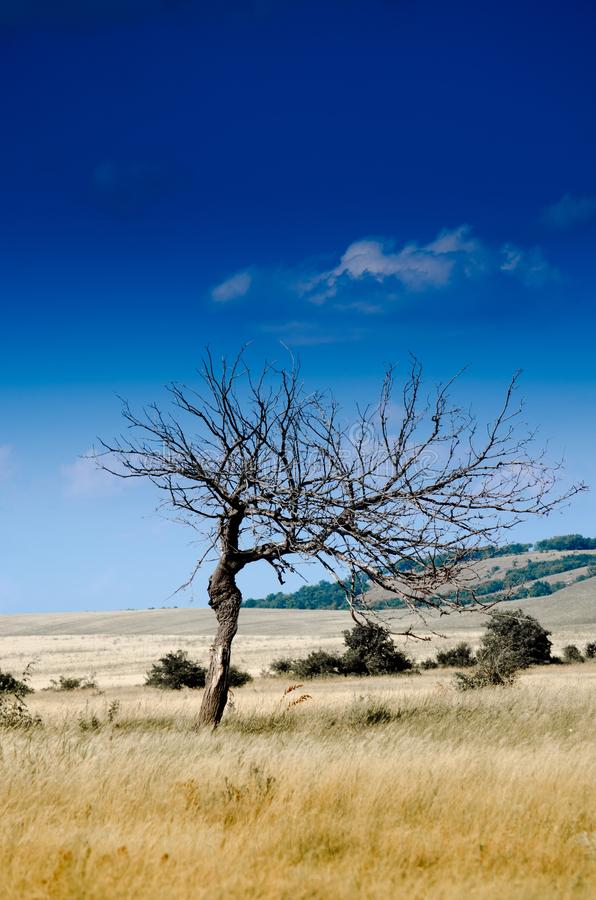 Download Clear Sky during Daytime stock image. Image of grass - 83018415