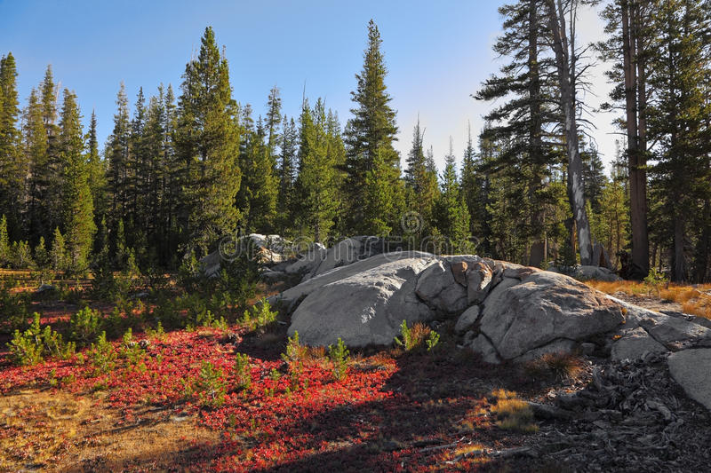 Download Clear Solar Morning And  Red Moss Stock Photo - Image: 13372944