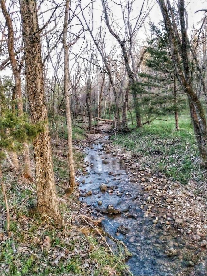 Clear Streams. Water creek forest thirsty royalty free stock image