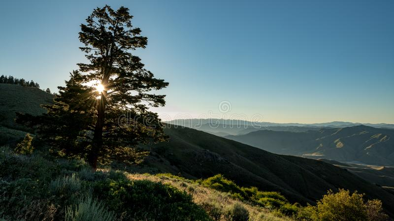 Clear sun star shines through a line pin tree above a canyon in stock photo