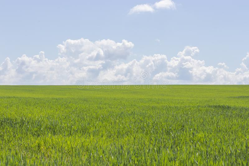 Clear sunny day, green grass and blue sky, landscape background wallpaper. Beautiful nature, green field, white clouds in the sky royalty free stock images
