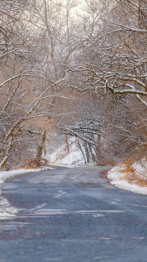 Clear Vertical Road with canopy of snowy trees in Salt lake City stock photo