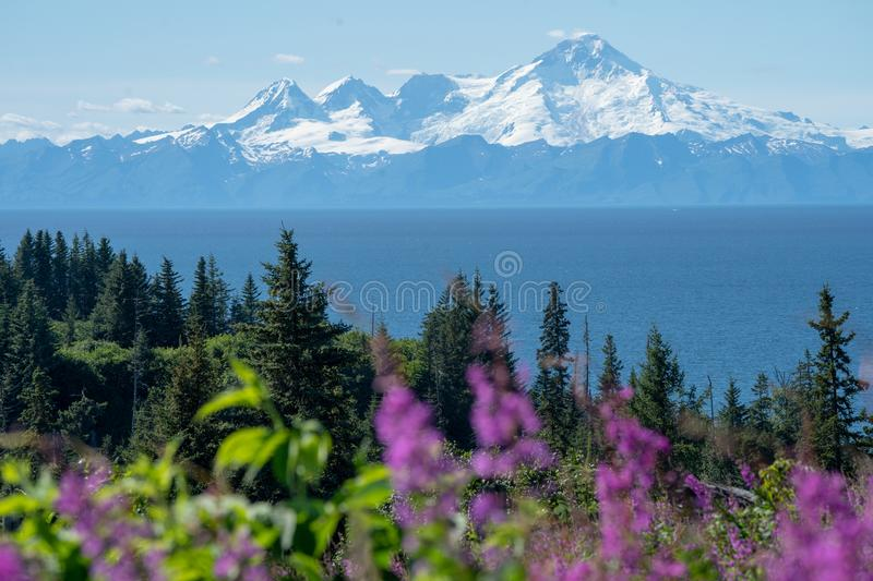 Clear view of Mount Redoubt from Anchor Point Alaska on a sunny day. Fireweed and trees in the foreground. Clear view of Mount Redoubt from Anchor Point Alaska royalty free stock image